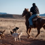 Pierre Totsi goes home after working cows on his family's land on the Navajo Reservation.