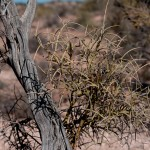 Plant life in Arizona Desert